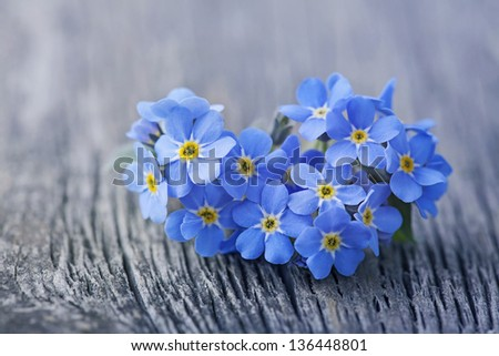 Forgetmenot flowers in heart shape on a wooden background - stock photo