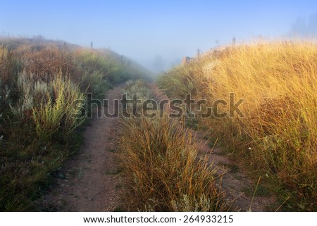 forked path leading through the green and yellow field at the end of which the fog - stock photo