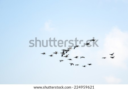 Formation of migratory birds at fall - stock photo