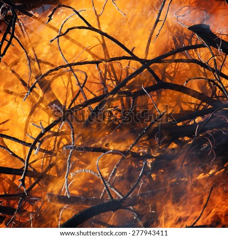 Forrest fire - stock photo