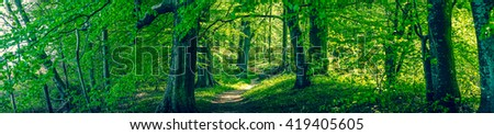 Forrest foliage with green trees in panorama - stock photo