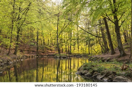 Forrest landscape with stream and sunlight.  - stock photo