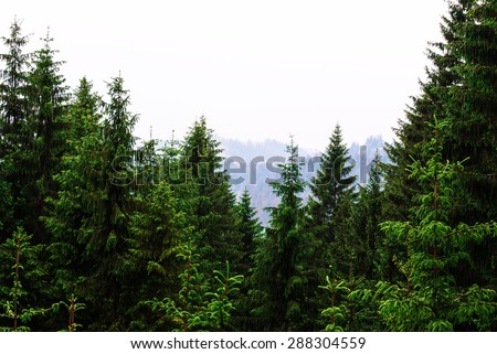 Forrest of green pine tree on mountainside - stock photo