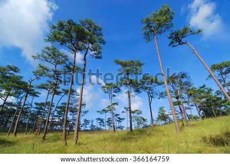Forrest of green pine trees on mountainside - stock photo