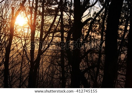 Forrest sunset - stock photo