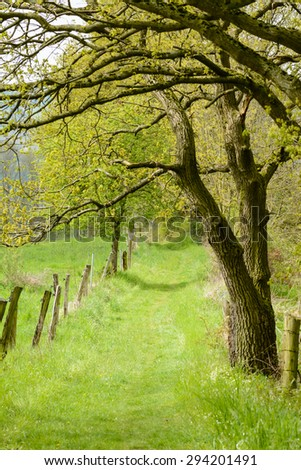 Forrest trail - stock photo