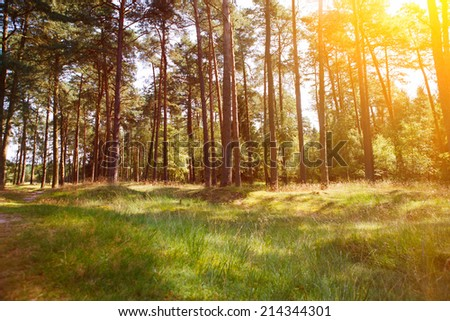 forrest with trees and sunlight - stock photo