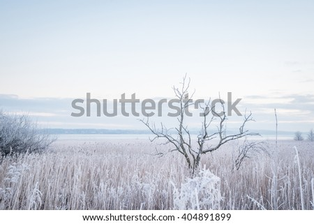 Forsty tree by the water in the winter - stock photo