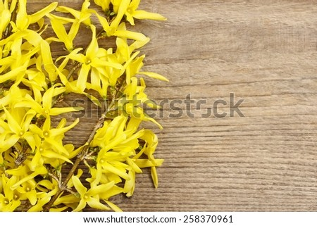 Forsythia on wooden background. Copy space - stock photo