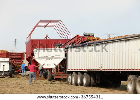 Fort Hall, Idaho, USA Sep. 8, 2014 Farm machinery harvesting potatoes in Idaho.