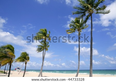 Fort Lauderdale Florida tropical beach with palm trees over blue sky - stock photo