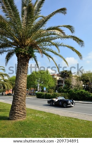 FORTE DEI MARMI, ITALY - APRIL 26: A black Triumph TR2 takes part to the GP Terre di Canossa classic car race on April 26, 2014 in Forte dei Marmi. The car was built in 1955. - stock photo