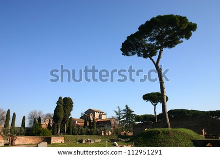 Forum romanum ruins in Rome with traditional Roman pines - stock photo
