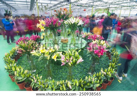FOSHAN-Jan 31:Spring comes, flowers in full bloom, in order to meet the upcoming Chinese New Year, foshan flower show, attracted many people to visit Jan 31, 2015 in Foshan, China - stock photo