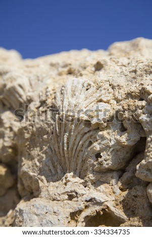 Fossil corals and shells of the Red Sea on blue sky background. - stock photo