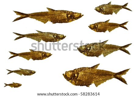 fossil fish in different sizes - stock photo