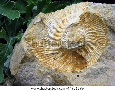 Fossil footprint in stone clams in a spiral on a background of green plants - stock photo