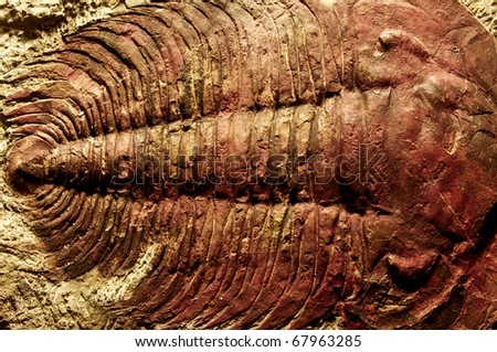 Fossil in museum of the northeast of Thailand. - stock photo