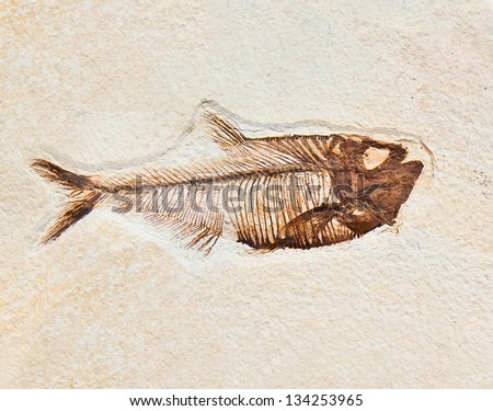Fossil in stone of a prehistoric fish - stock photo