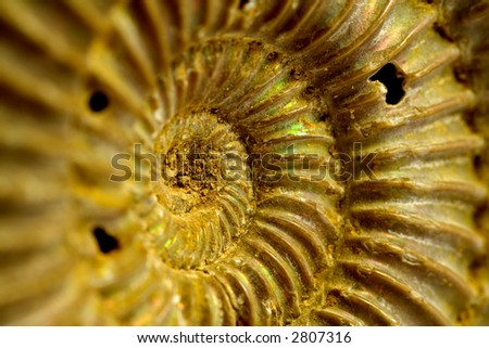 Fossil of ammonites - stock photo