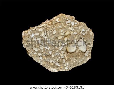 Fossil shellfish in limestone - stock photo