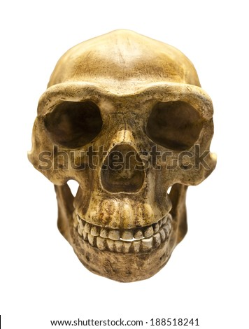 Fossil skull of Homo Antecessor - the earliest known human species in Europe. - stock photo