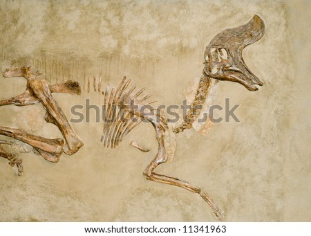 Fossilized dinosaur bones buried in the ground - stock photo
