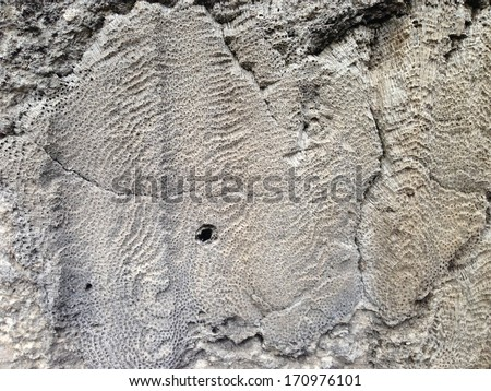 Fossils in Windley Key Fossil Reef Geological State Park in Florida - stock photo