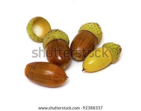 four acorns isolated on white - stock photo