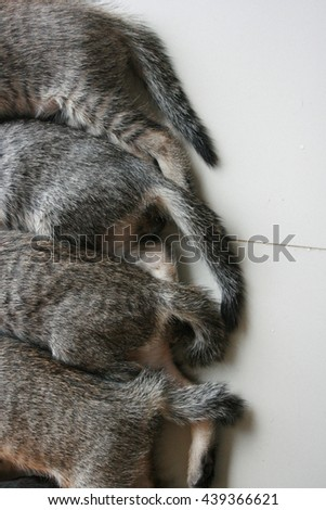 Four adorable funny Cute Kitten cat's tails and leg part lay down in line. Feeling sleep well happy together with family. - stock photo