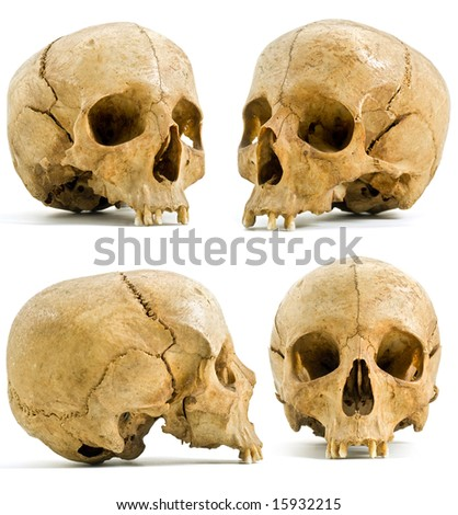 four angels of human skull isolated on white - stock photo