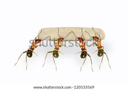 Four ants are carrying cargo.