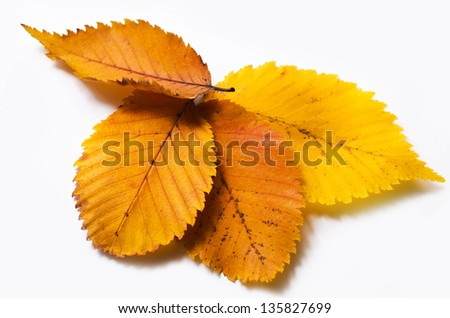 Four autumn leaf on a white background - stock photo