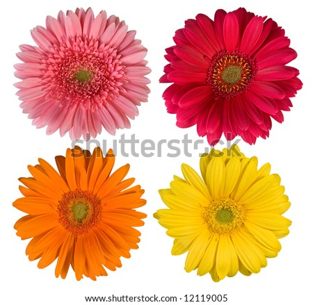 Four beautiful flowers - More flowers in my portfolio!!!! - stock photo