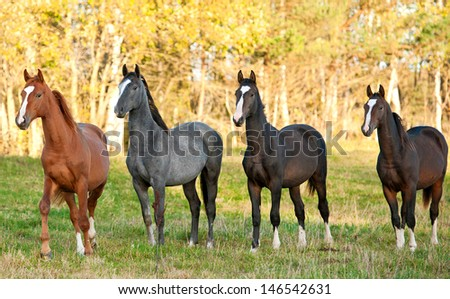 Four beautiful young horses standing at field in autumn - stock photo