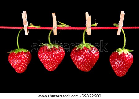 four beautifull strawberries hanging on a red rope. Isolated on black background.