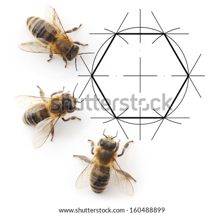 Four bees which consider the drawing honeycombs - stock photo