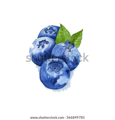 four berries watercolor blueberry with leaves isolated - stock photo