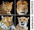 Four big wild cats (leopard, tiger, lion, cheetah) - stock photo