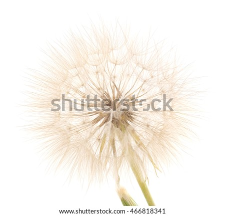 Four blowball isolated on a white background.