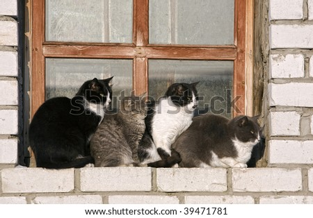 Four cats of different breed sit on a window sill is close to each other - stock photo