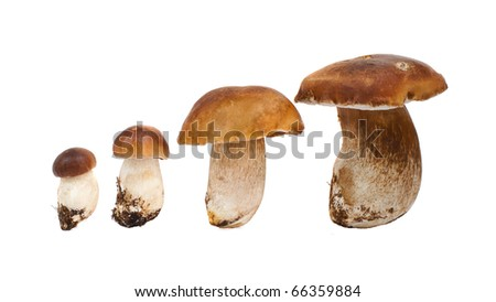 four ceps, isolated on white