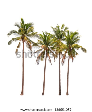 Four coconut palm trees isolated on white background - stock photo