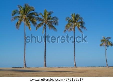 Four coconut palm trees on Waikiki Beach with a blue sky background. - stock photo