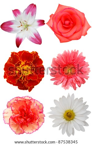 Four colorful blooms isolated white