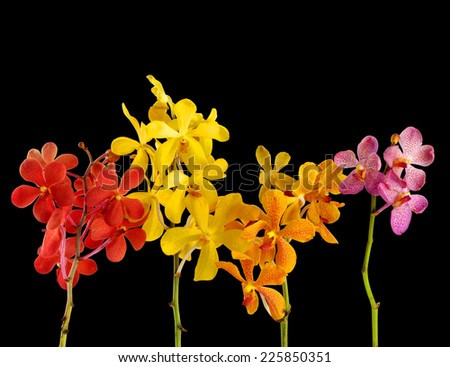 four colorful orchid with stem isolated on black background - stock photo