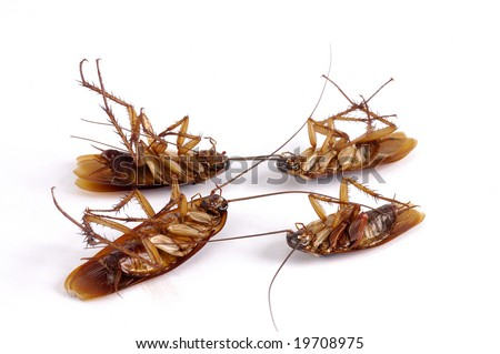 Four dead cockroaches with selective focus - stock photo