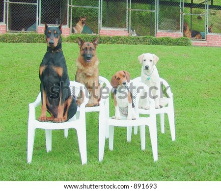 Four dogs at dog school - stock photo