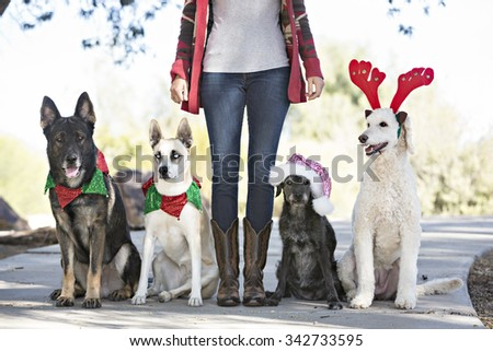Four dogs with owners legs wearing holiday hats - stock photo