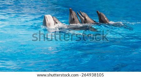 Four dolphins and Beluga whales dancing Lambada - stock photo